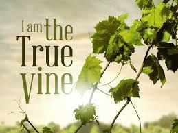 jesus-true-vine