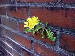 flower in wall