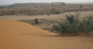 desert L
