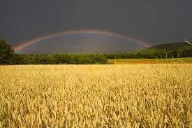harvest rainbow